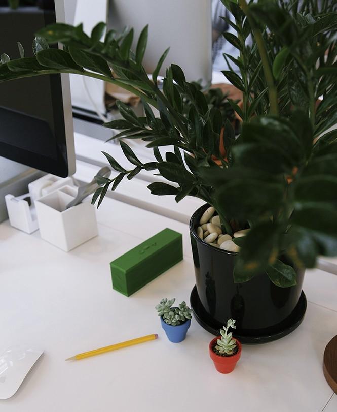Kako odabrati i negovati biljke za kancelariju