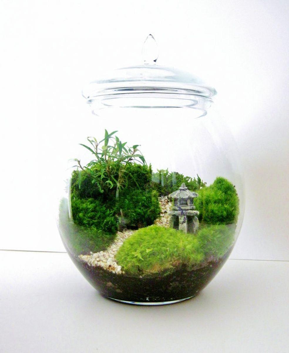 Napravite čaroban terarijum za biljke